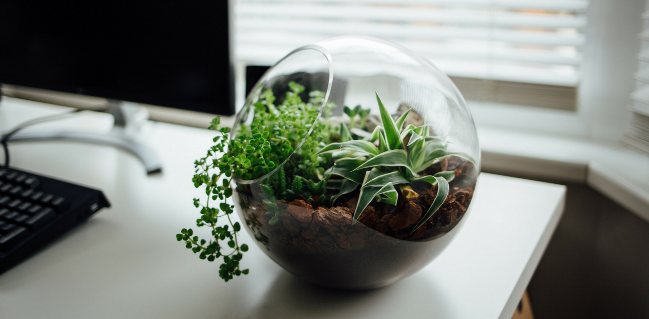 The Benefits of Owning Houseplants