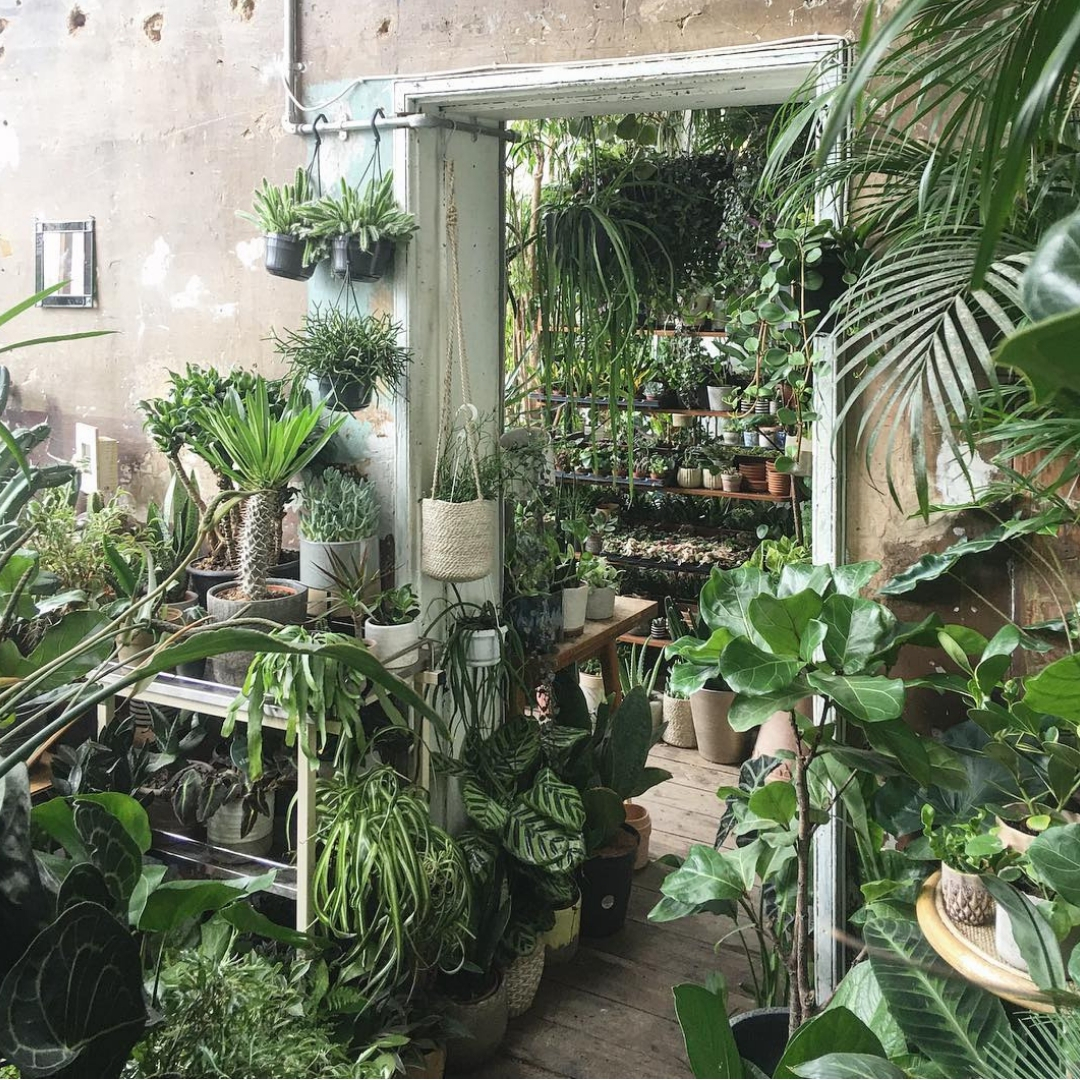 The Best Places To Buy Your Greens (Plants) In London