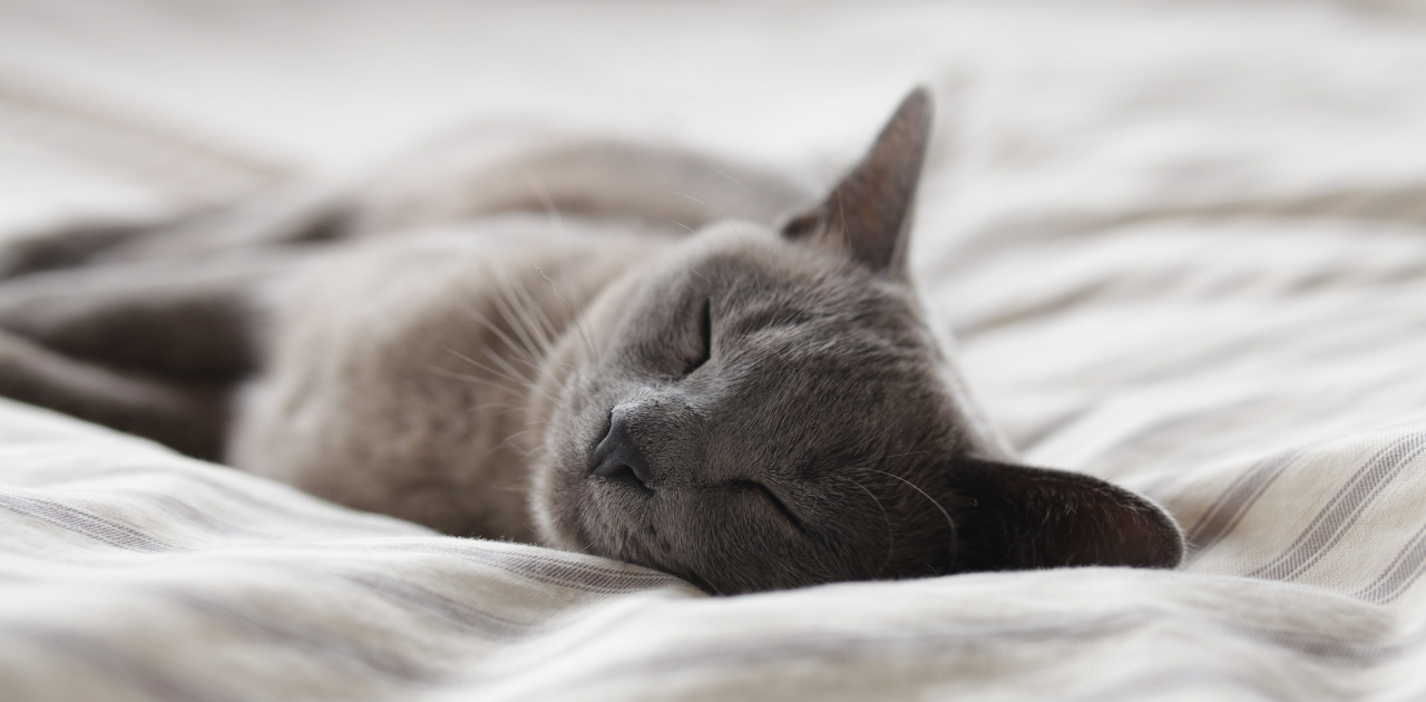 4 tips for getting the best night's sleep in your house share